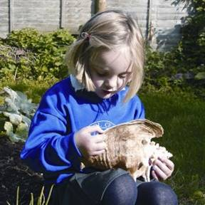 Girl examining large conch shell
