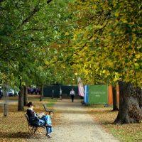 Cheltenham Festival leafy boulevard
