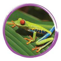 September - tree frog