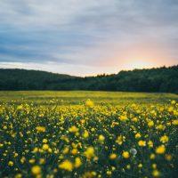 Environmental liturgy