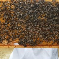 Bringing bees back to Bourton