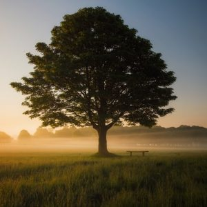 Free trees for every community